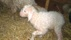 En nyfödd killing