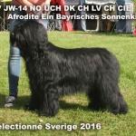SelSV -16