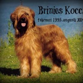 kocci5