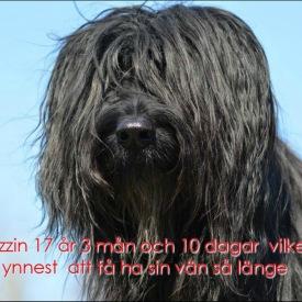 10Ruzzin