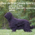 onyxiaAfBd