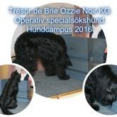 Trésor de Brie Ozzie Noir KG