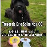 TdB_SpikeNoir