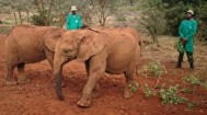 David Sheldrick Wilde life Trust, Narobi