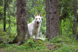 Ludde , en  healing hund  och en stark ljus själ