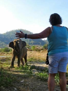 Ann Ahlgren arbetar med elefanterna i Thailand 2016