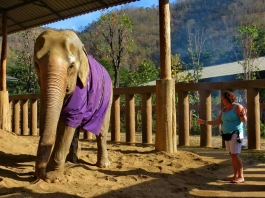 Sometimes the animal contact us for help! It is always important to listen to them. Ann in Thailand.