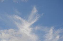Angels of light is around us