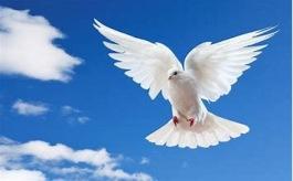 Den Heliga Anden hjälper er att aktivera era vingar och åter bli fria själar.