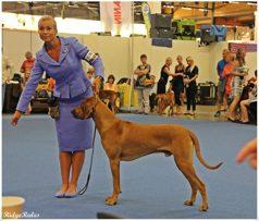 13m World Dog Show Helsinki