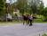 Grannen Lasse med sina hästar