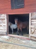 Evakuerade hästar