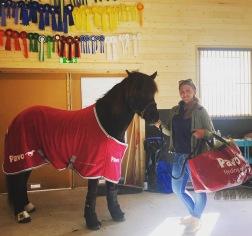 Barigårds Ishestar är stolta att få representera Pavo hästfoder