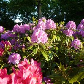 Till och med blommorna i Stadsparken såg nöjda ut i solskenet.