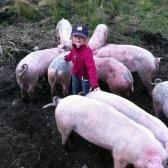 Våra frigående grisar Västergårdarna Halland
