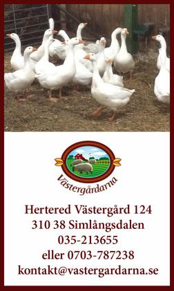 Färsk gås Halland. Hos Västergårdarna utanför Halmstad kan du köpa/beställa färsk och fryst gås.