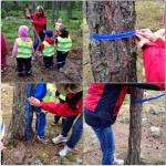mäta träd