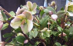 floristateljen i danderyd