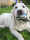 doggy delphi 2