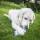 doggy delphi 3
