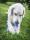 doggy delphi 4