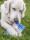 Doggy delphi 5