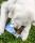 doggy delphi 6