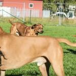hunter och milton