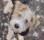 Leo puppy