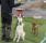 dogs (16 av 43)