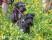 Hilde valpar åsk juni  (34 av 174)