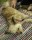 gbg hundsim (47 av 53)