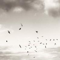 35 Fåglar, Vadstena