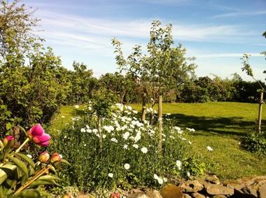 En del av trädgården