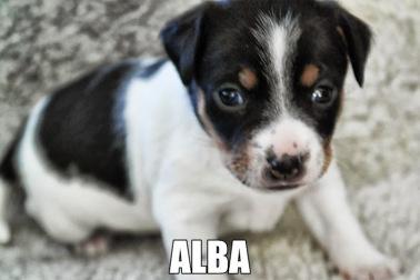 Gullvivebackens Alba