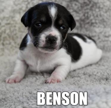 Gullvivebackens Benson