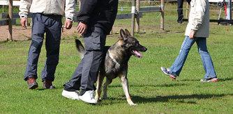 Bild från SVenska Brukshundklubben