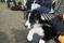 Lille Jay tittar nyfiket på de stora hundarna och undrar om det är sådant här kul han ska få syssla med när han blir lite större.