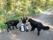 Kia med Zigge och Felix i spårskogen, man tar sig en liten fikapaus i väntan på att spåret får rätt liggtid.