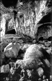 Det döda fåret på Akeldama i Jerusalem. Foto: Richard Holmgren