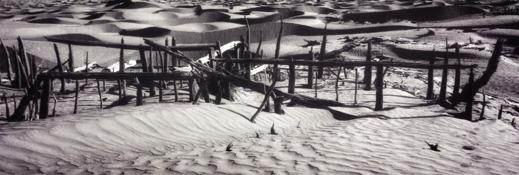 Vy över ett större residens vid Niya-boplatsen i södra Tarim. Lämningen ger en bild av öknens extrema bevaringsförhållande där den bärande träkonstruktionen fortfarande står kvar, i detta fall efter 2200 år. Foto: Arkeologiska institutet i Xinjiang