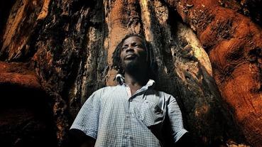 Inuti stammen på ett gigantiskt kapokträd. På ön Tobago bör detta ses som ett synnerligen vågat initiativ. Foto: Richard Holmgren.