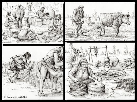 Jordbruk, mat och beredning i forntiden. Illustration: Richard Holmgren ARCDOC