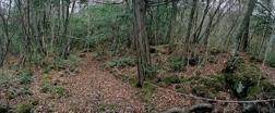 Ari Saarto, fotografi ur serien Suicide Forest, Police Line #3, 2006. 2006.