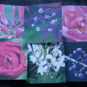 Blomsterkort