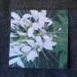 Blomsterkort - Paradisblomster 10 stycken