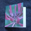 Blomsterkort - Karins kaprifol 10 stycken