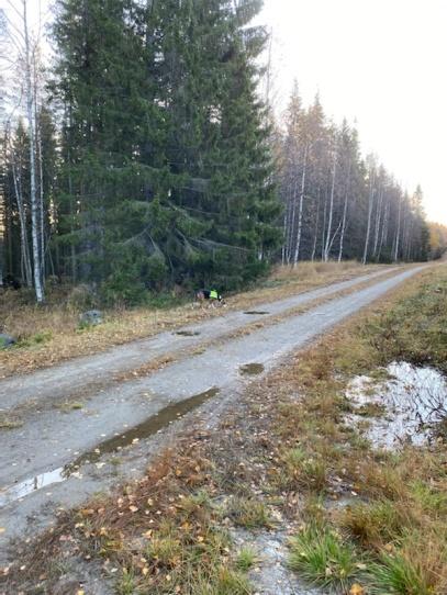 Ylva är släppt i Norrgård