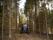 Valtra A-serie skog