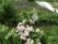 Äppleblom 2014-05-13 18-27-19 3264x2448
